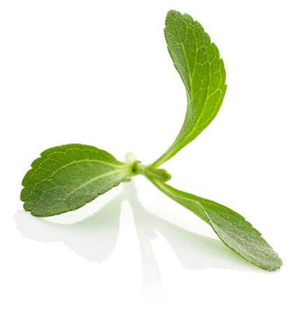 stevia blaadje